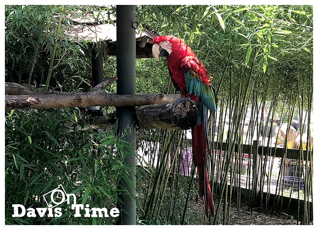 The Creature Conservancy - Rico the Macaw